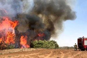 آتشسوزی گسترده باعث قطع برق شهرکهای صهیونیستی شد