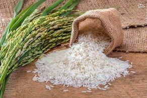 معرفی گرانترین برنجهای ایرانی + قیمت