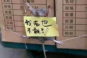 این مرد موشی را که برنجش را دزدیده بود به طرز فجیعی تنبیه کرد!+ عکس