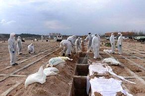 مرگ ۱۱۵ بیمار کووید۱۹ دیگر در کشور