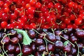 معجزه این 2 میوه، بیماری کبد را درمان می کند
