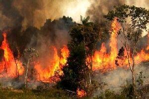 ارتباط عجیب میان دود آتشسوزی با ابتلا به کرونا