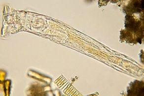 زنده شدن باورنکردنی موجوداتی منجمد بعد از ۲۴ هزار سال!