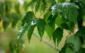 شروع دوباره بارندگی و وزش باد شدید در کشور