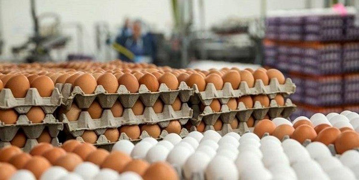 افزایش قیمت تخممرغ در بازار ادامه دارد/ هر عدد تخممرغ به ۱۶۰۰تومان رسید