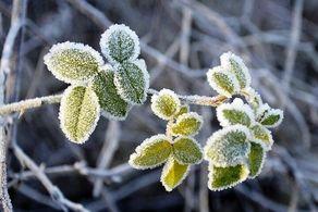 دمای هوا در آخر هفته به زیر صفر درجه خواهد رسید!