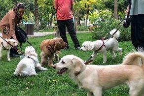 تدوین قانون ممنوعیت سگ گردانی در برنامه مجلس/ لزوم در نظر گرفتن محلهای مشخص و معین برای سگهای خانگی