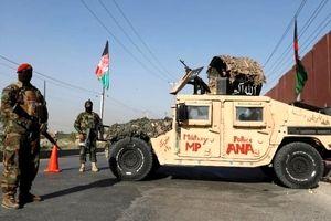 ضربه سنگین دیگری بر پیکر طالبان وارد شد/1520 نفر کشته شدند