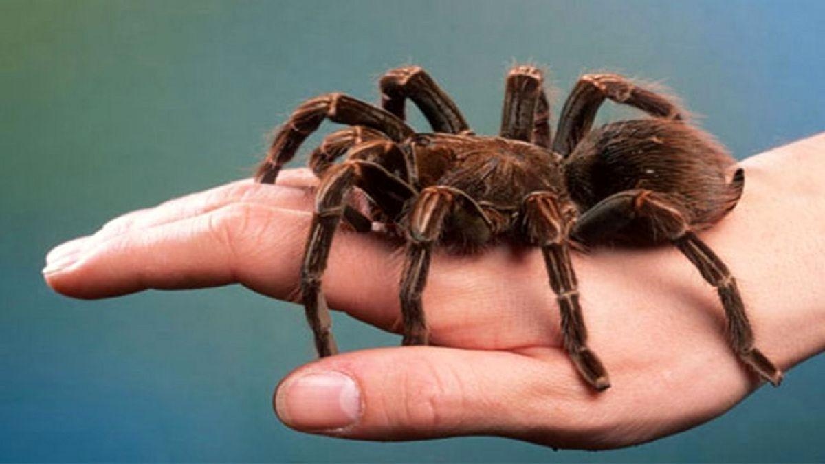 عجیبترین جانورانی که در بدن انسان پیدا شدند