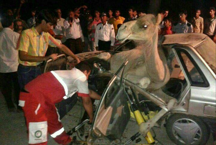 تصادف هولناک پراید با شتر/ شمار کشتهها و مجروحان اعلام شد+ عکس
