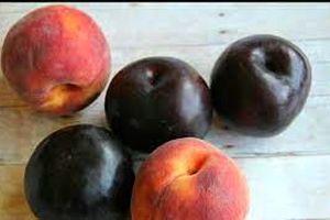 این 2 میوه بدترین سلولهای سرطانی را نابود می کنند!