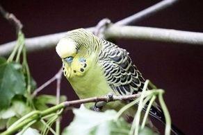 چرا پرندگان وسط پرواز یک چشم خود را می بندند؟