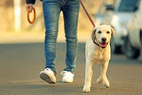 هشدار پلیس؛ سگ گردانی در شهر ممنوع!